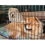 клетка для собак № 6_