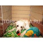 клетка для собак недорого