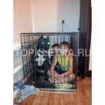 клетка для собаки № 4