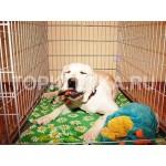 клетки для собак - цена