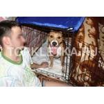 складная клетка для собак